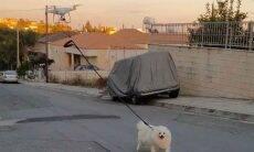 Durante quarentena homem usa drone para passear com cachorro