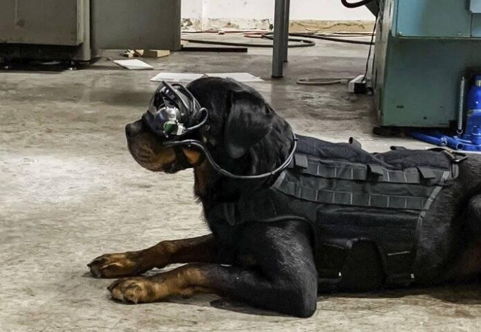 Exército dos EUA quer usar óculos de realidade aumentada para guiar cachorros