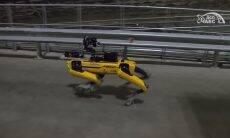 Cachorro-robô é usado para medir radiação em Chernobyl