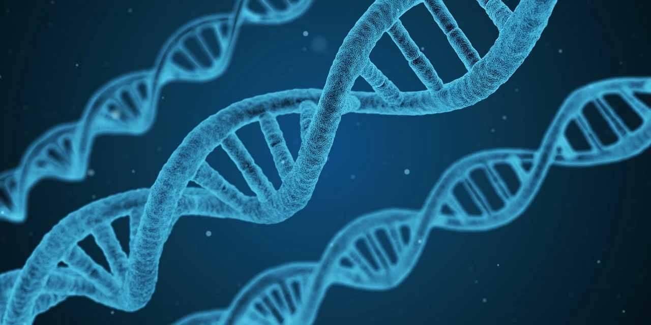 Cientistas israelenses afirmam conseguir reverter o envelhecimento, apenas com oxigênio. Foto: Pixabay