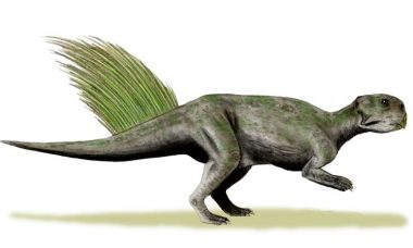 Cientistas reconstituem ânus de dinossauro que viveu há 120 milhão de anos