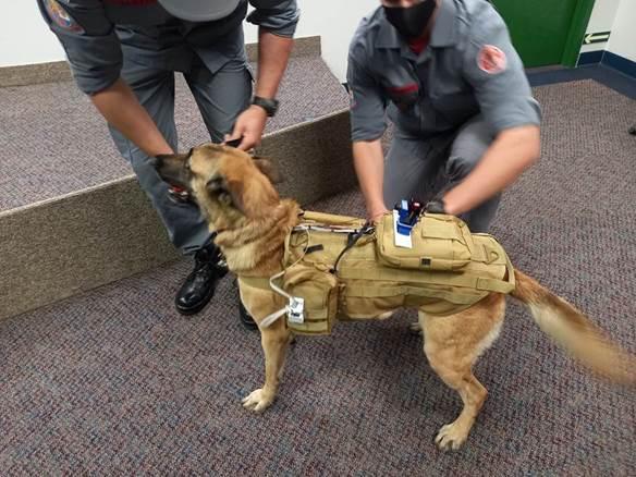 Fatec desenvolve colete tecnológico para cães de resgate