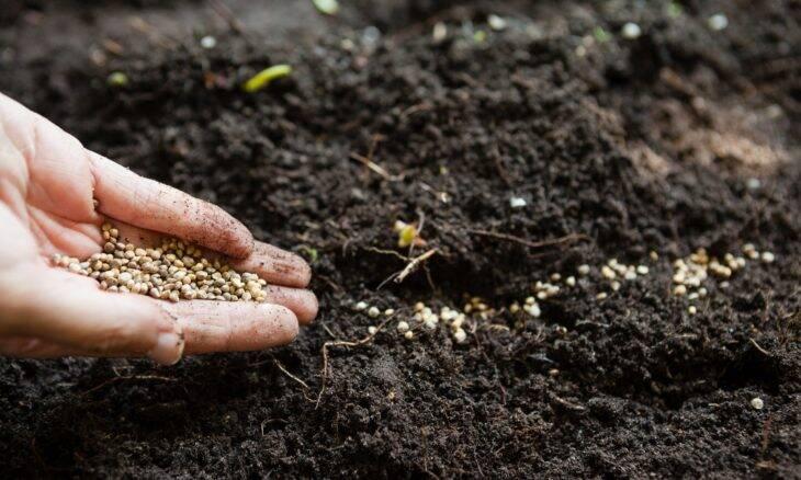 Inteligência artificial permite automatizar análise de sementes na agricultuta