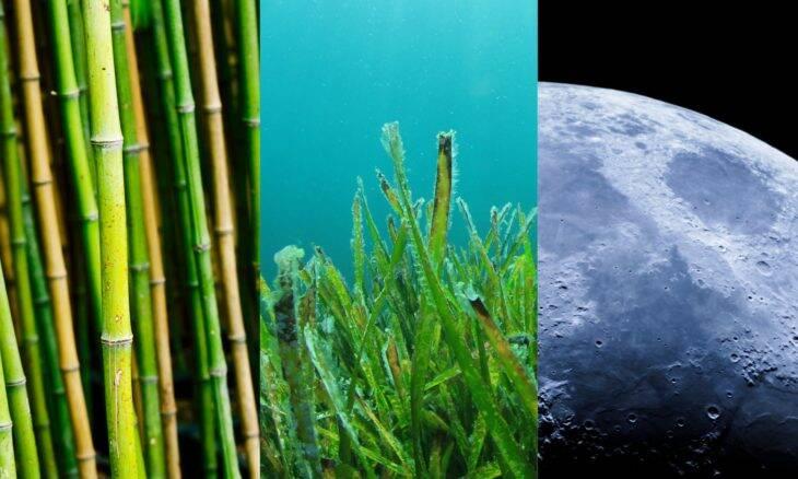 De bambu a algas marinhas: conheça os materiais que estarão nos aviões do futuro