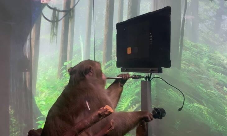 Empresa de Elon Musk bota macaco com implante mental para jogar videogame com a mente