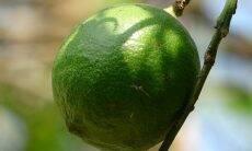 Nanopartículas são usadas para aumentar a validade de frutos e flores