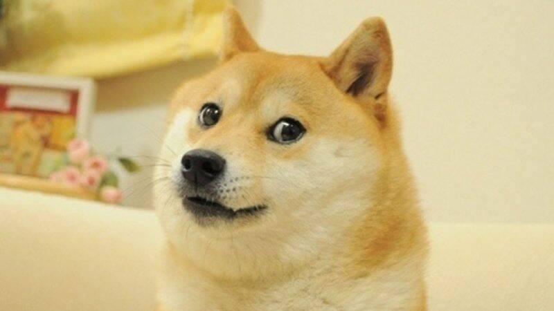 Meme Doge é vendido por R$ 20 milhões e vira o mais caro da história