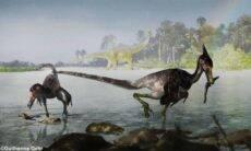 Estudo brasileiro descreve dinossauro que viveu no período Cretáceo. Foto: Divulgação / Museu Nacional