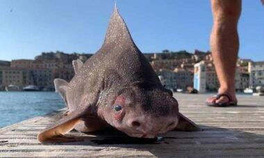 Peixe com corpo de tubarão e cara de porco surpreende pescadores na Itália. Foto: Reprodução Facebook