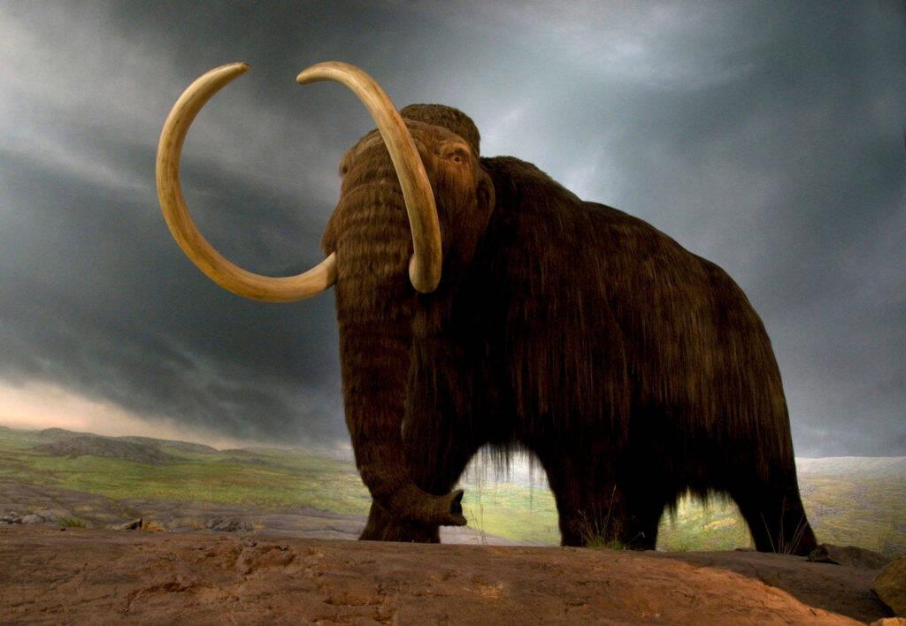 Empresa anuncia projeto de US$ 15 milhões para ressucitar mamutes